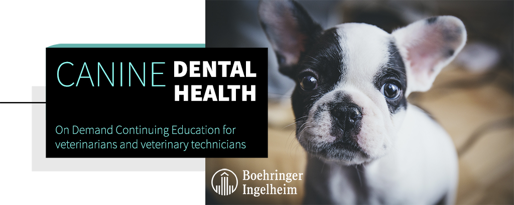Canine Dental Health. On Demand Continuing Education for veterinarians and veterinary technicians.